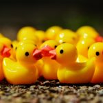 ducks-1339549